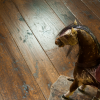 Generations Rich Hand Planed Oak Flooring with Rocking Horse