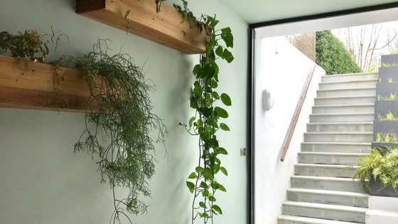 Indoor Living Wall Garden