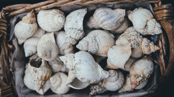 Sea Shells from the beach in a wicker basket